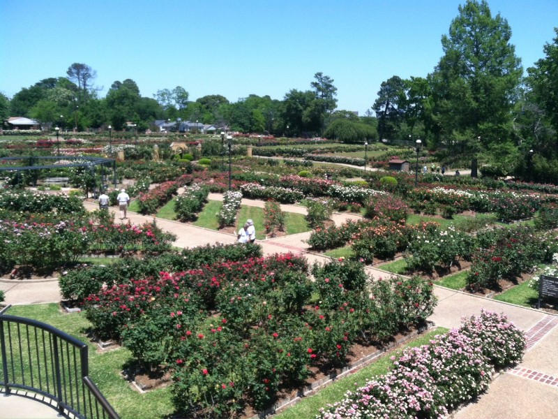 Roses In Garden: Visit The Largest Rose Garden In America In Tyler, Texas