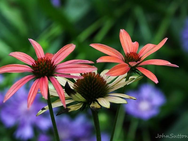 5 beautiful north carolina gardens you must visit in spring airlie gardens wilmington mightylinksfo