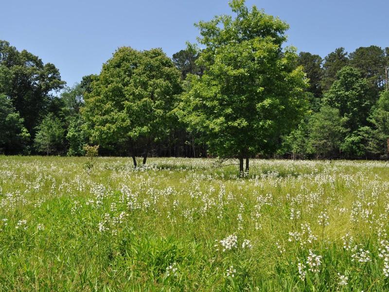 NC Botanical Garden, Chapel Hill