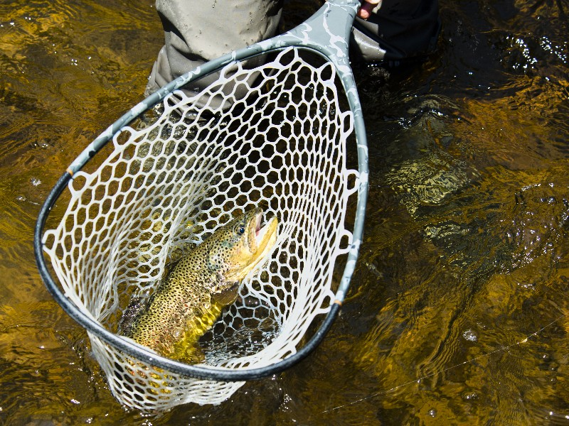 9 Best Places for Fishing in Colorado (with Photos) - TripsToDiscover