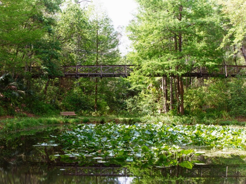 Discover Colorful Foliage at Ravine Gardens State Park in Florida ...