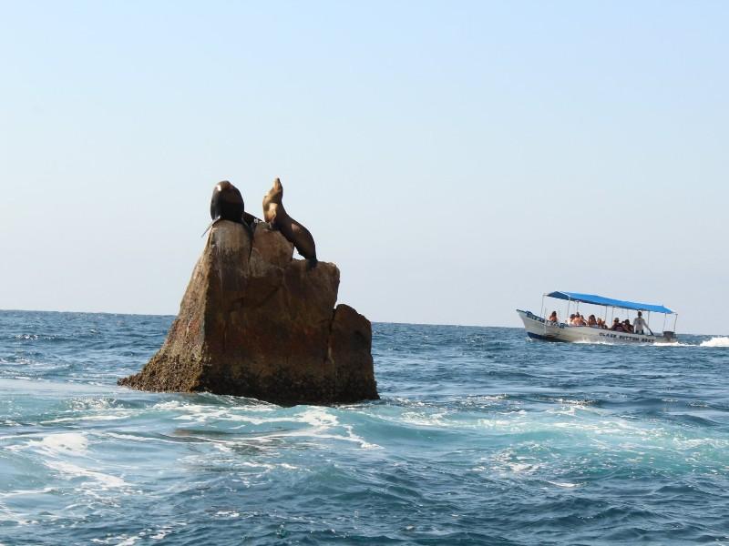 The Sea Lion Near Lover S Beach Cabo