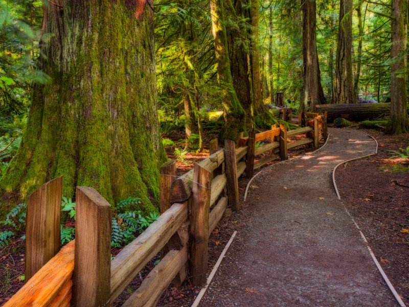 Cathedral Grove Provincial Park