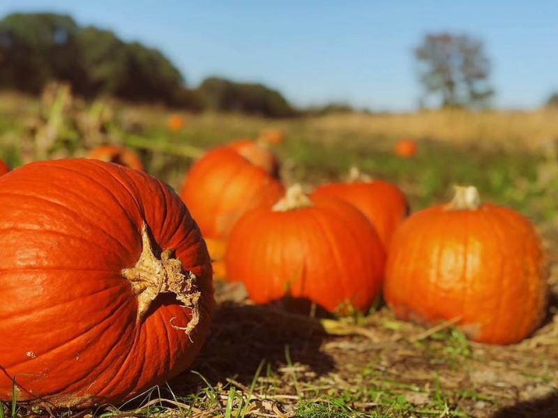 6 Pumpkin Patches To Visit In North Carolina Year Fall Guide Tripstodiscover