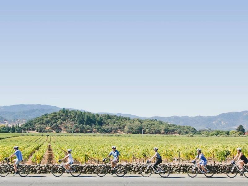 Tham quan bằng xe đạp xuyên qua các vườn nho
