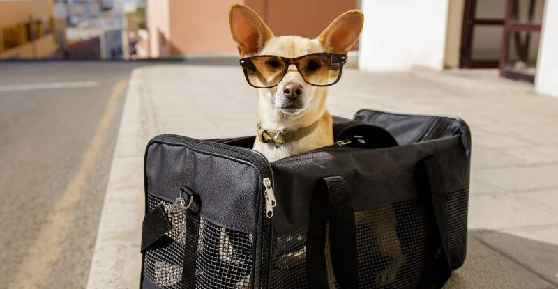 9 Best Pet Carriers for Travel on Amazon