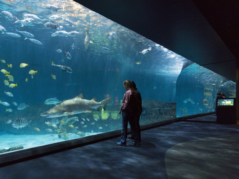 8 Best Aquariums in North Carolina (Kid-Friendly!) – Trips To Discover