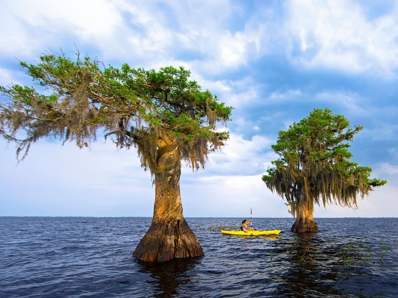 Kayaking on Blue Cypress Lake