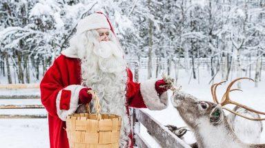 Santa Claus holding basket and feeding reindeer