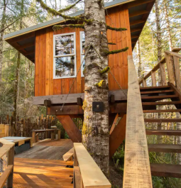 A tree house cabin tucked between the trees in Oregon