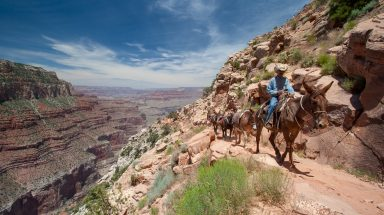 A mule ride tour follows a path with breathtaking views of the Grand Canyon