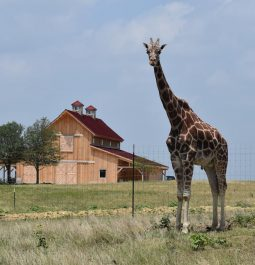 Property view with home and giraffee