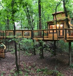 Treehouse surrounded by green trees