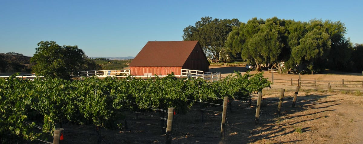 grapevines at Vintage Ranch