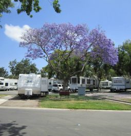 RVs parked at La Pacifica RV Park